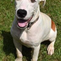 Adopt A Pet :: Callaway - - Ridgeland, SC