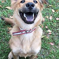 Adopt A Pet :: Pon - Richmond, BC