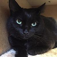 Adopt A Pet :: Midnight 2 - Cumberland, ME