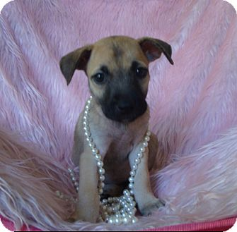 German Shepherd Dog Mix Puppy for adoption in Fort Worth, Texas - PATSY