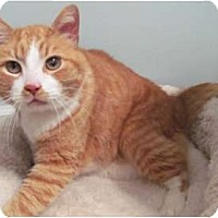 Adopt A Pet :: Mono - Alexandria, VA