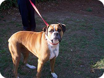 Boxer Mix Dog for adoption in Decatur, Georgia - Chloe