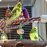 Adopt A Pet :: Sugar and Spice - Asheville, NC