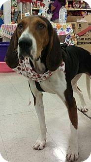 Treeing Walker Coonhound Mix Dog for adoption in Alexis, North Carolina - Rufus
