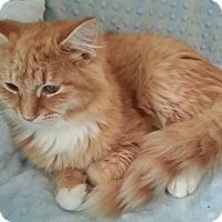 Adopt A Pet :: Valentin, Maxsim Artum - Harrisburg, NC