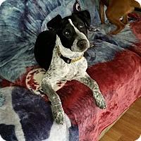 Adopt A Pet :: Fred - Santa Rosa, CA