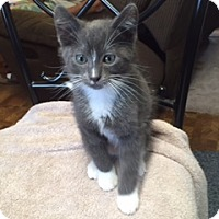 Adopt A Pet :: shadow - Kelso/Longview, WA