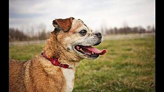 Pug/Terrier (Unknown Type, Medium) Mix Dog for adoption in Landenberg, Pennsylvania - Zoe Mae