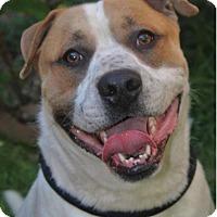 Adopt A Pet :: HUNTER - Red Bluff, CA