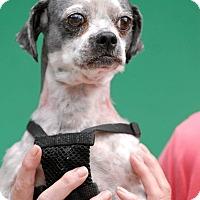 Adopt A Pet :: Spud - Pottsville, PA
