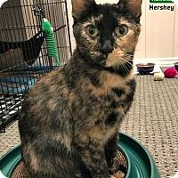 Adopt A Pet :: Hershey - Oakville, ON