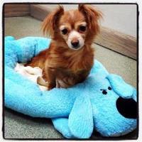 Adopt A Pet :: Loni Anderson - Palatine, IL