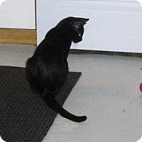 Adopt A Pet :: Mentor - Richmond, VA