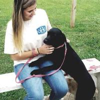 Adopt A Pet :: Lucy - Walpole, MA