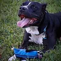 Adopt A Pet :: Otis - Nashville, TN