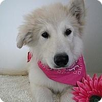 Adopt A Pet :: Dallas - Monteregie, QC