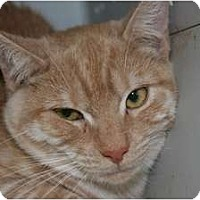 Adopt A Pet :: Annabelle - Frederick, MD