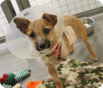 Terrier (Unknown Type, Medium) Dog for adoption in Atlanta, Georgia - Rhubarb