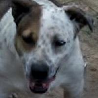 Adopt A Pet :: Dudley - Oakland, AR