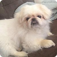 Adopt A Pet :: JELLY BEAN - SO CALIF, CA