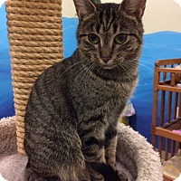 Adopt A Pet :: Winnie - Byron Center, MI