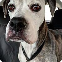 Adopt A Pet :: ROXIE - Port Clinton, OH