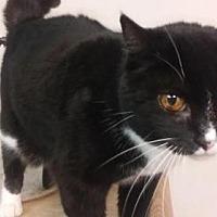 Adopt A Pet :: White Paws - Logan, UT