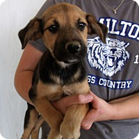 Adopt A Pet :: PINE TREE PUPS D - Corona, CA