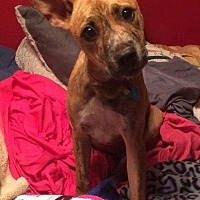 Adopt A Pet :: Apricot - Acworth, GA