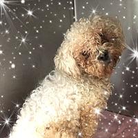 Adopt A Pet :: Bumper - IL - Tulsa, OK