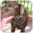 Photo 2 - Labrador Retriever Dog for adoption in Poway, California - KOBE