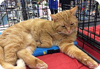 Domestic Shorthair Cat for adoption in Port Republic, Maryland - Sasha