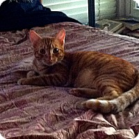 Adopt A Pet :: Adam 2 - Los Alamitos, CA