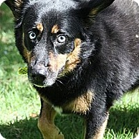 Adopt A Pet :: Bixby($250 adoption fee) - Staunton, VA