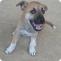 Adopt A Pet :: Nelly - Arlington, TX