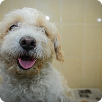 Adopt A Pet :: Julian - New York, NY
