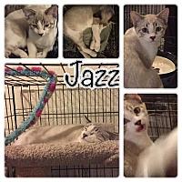 Adopt A Pet :: Jazz - Scottsdale, AZ