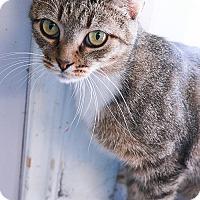 Adopt A Pet :: Effie - Loogootee, IN