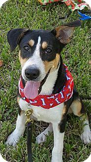 Hound (Unknown Type) Mix Dog for adoption in San Leon, Texas - Bodie