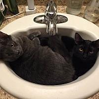 Adopt A Pet :: Butter - Monrovia, CA