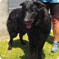 Adopt A Pet :: Stan - Anaheim, CA