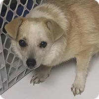 Adopt A Pet :: Perry - Warner Robins, GA