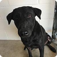 Adopt A Pet :: Roxie - Kirby, TX