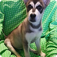 Adopt A Pet :: Banjo - Los Angeles, CA