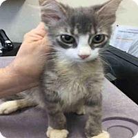 Adopt A Pet :: A443093 - San Antonio, TX