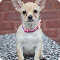 Adopt A Pet :: Queenie - Hagerstown, MD