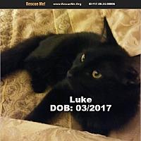Adopt A Pet :: Luke - Chandler, AZ