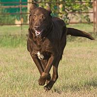 Adopt A Pet :: BARCLAY - Augusta, ME