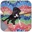 Photo 3 - Labrador Retriever Mix Dog for adoption in Trenton, New Jersey - Pippi Longstocking