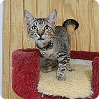 Adopt A Pet :: Peyton - The Colony, TX